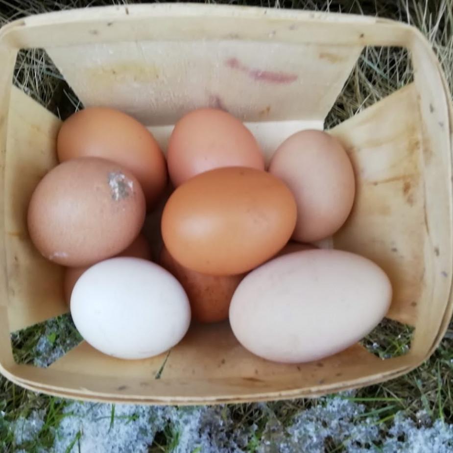 Skelbimo Laisvų vištų kiaušiniai nuotrauka