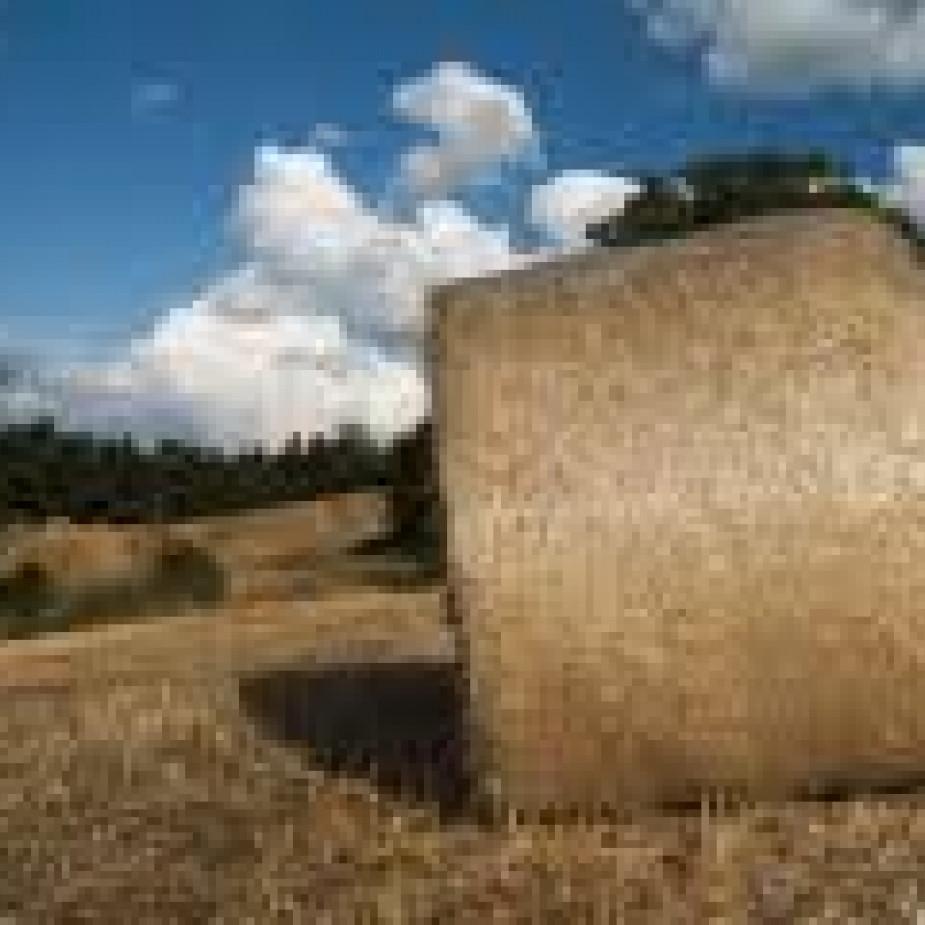 Skelbimo Šieno rulonai, iš pastogės, sausi nuotrauka